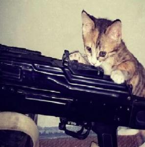 Fotos de gatos e armas publicadas por autoproclamados terroristas tornaram-se virais.